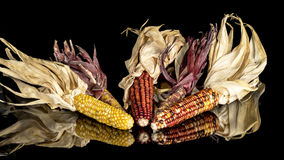 Indian corn laid in a reflective surface Stock Photos