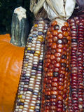 Indian Corn and Pumpkin Stock Image