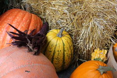 Indian Corn Pumpkin  Cabbage Hay Bale Stock Photography