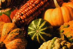 Indian Corn, Pumpkin, Ornamental Gourds Stock Images