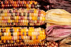 Indian Corn Royalty Free Stock Photo