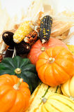 Indian Corn And Squash Stock Images