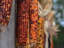 Autumn decorations Indian corn stalks bokeh background Royalty Free Stock Photo