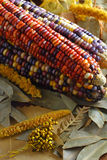 Indian Corn (vertical) Royalty Free Stock Image