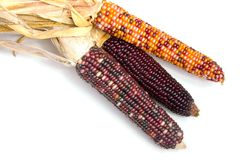 Indian Corn1. Three ears of Indian Corn shot over white Royalty Free Stock Images
