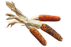 Indian Corns Stock Image