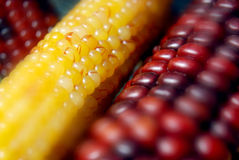 indian corns Stock Photo