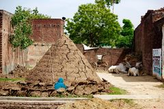 Indian Cowshed Royalty Free Stock Photo