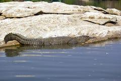 Indian crocodile Stock Photo