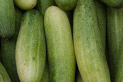 Indian cucumbers. Vegetable Market. Many big cucumbers. Picture for interior design or website design Royalty Free Stock Photography