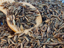 Indian cumin seeds Royalty Free Stock Photography