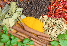 Indian Curry Spices. Selection of Indian curry spices Stock Image