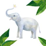 Indian cute baby elephant holds a white flower: frangipani or plumeria and green tropical leaves. Hand drawn watercolor. Illustration. Isolated on white vector illustration