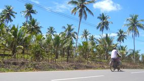 Indian dad and son riding a bicycle along asphalt road in tropical country on sunny day. Asian family cycling on track. At countryside. Beautiful scenic of palm stock footage