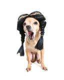 Indian dog Stock Image