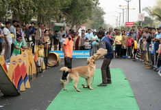 Indian Dog trainer show the attack style of the dog  Royalty Free Stock Images