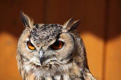 Indian eagle-owl (Bubo bengalensis). Stock Image