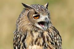 Indian eagle-owl Stock Photos