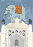 Indian Elefant Stock Images