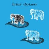 Indian elephant Stock Images
