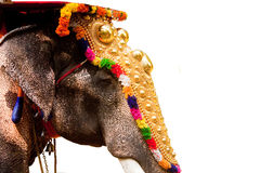 Indian Elephant. With golden ornaments for religious festival Stock Photos