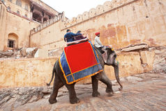 Indian elephant slow walking with tourists past stone walls Stock Photo