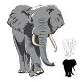 Indian Elephant  on white Royalty Free Stock Photos