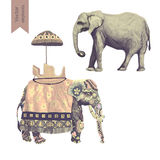 Indian elephants illustrations set. Isolated on white. Vector. Indian elephants . Isolated on white. Vector illustrations Royalty Free Stock Image