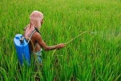 Indian farmer stock photo