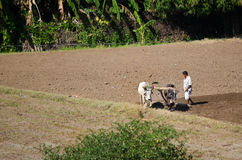 Indian Farmer in the field Stock Image