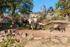 An Indian farmer operates the irrigation system fo. R his field with two oxen, Rajasthan, India Stock Images