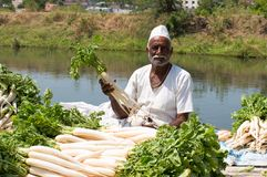Indian farmer selling white radish. On road side shop Stock Image