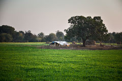Indian farmland Stock Photo