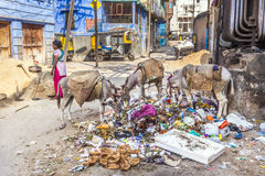 Indian feamle worker and donkeys stock photo