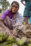 Indian female vendor Stock Photography