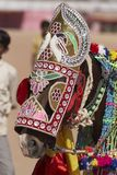 Indian Festival Horse Royalty Free Stock Photography