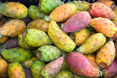 Indian fig. Fruits of opuntia ficus-indica, indian fig, typical mediterranean cactus Stock Photos