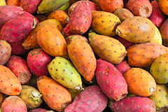 Indian figs Stock Image
