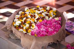 Indian flower Royalty Free Stock Image