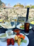 Indian foods lunch view for cherry blossom. Amazing lunch in Tokyo Sakura season Stock Photo