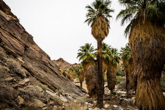 Indian Garden. In Palm Spring Stock Photography