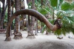 Indian Garden Valley. Palm Spring Royalty Free Stock Photos