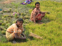 Indian girls. Poor Indian girl working in the field, smiling Royalty Free Stock Photo