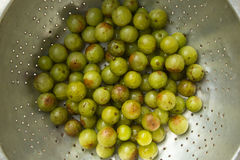 Indian gooseberry. Close up of fresh indian gooseberry Royalty Free Stock Images