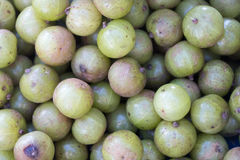 Indian gooseberry. image for education and research. Indian gooseberry, miracle fruits , high vitamin C, healthy fruits, thai local fruits. Image for education stock photo