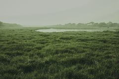 Indian grass lands looking awesome royalty free stock photo
