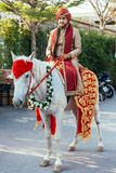 Indian groom ridding white horse with yellow and red pattern fabric, flower necklace and red turban with guests. Indian groom ridding white horse with yellow Stock Photography