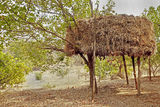 Indian Haystack on stilts in an orchard Royalty Free Stock Photography
