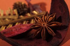 Indian herb anise star Stock Images