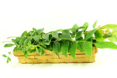 Indian herb curry leaves or curry patta closeup on white background Stock Photo